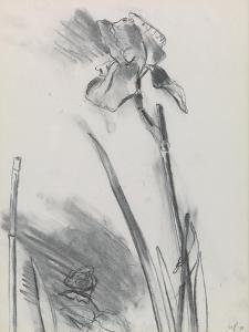 Iris 2 by William Packer