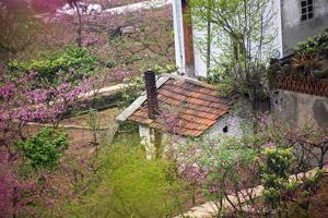 Peach Blossoms, Chinese Roofs, Village, Chengdu, Sichuan, China by William Perry