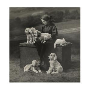 English Setter Puppies Sit Next to a Young Scottish Girl by William Reid