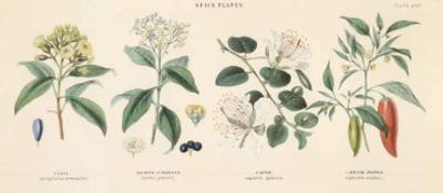 Spice Plants II
