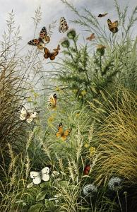 The Butterflies' Haunt (Dandelion Clocks and Thistles) by William Scott Myles