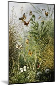 The Butterflies' Haunt (Dandelion Clocks and Thistles) by William Scott Myles