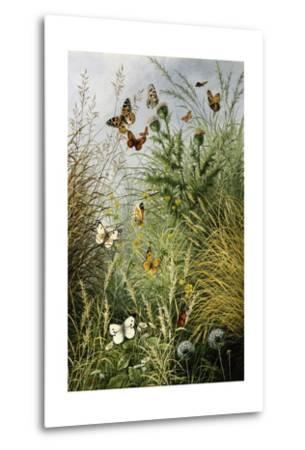 The Butterflies' Haunt (Dandelion Clocks and Thistles)