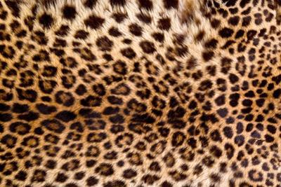 Real Leopard Skin. by William Scott