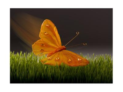 Surreal Butterfly by William Scott