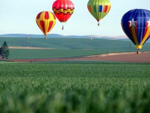 Colorful Hot Air Balloons Float over a Wheat Field in Walla Walla, Washington, USA by William Sutton