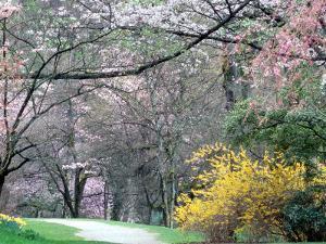 Spring Blooms in Washington Park Arboretum, Seattle, Washington, USA by William Sutton