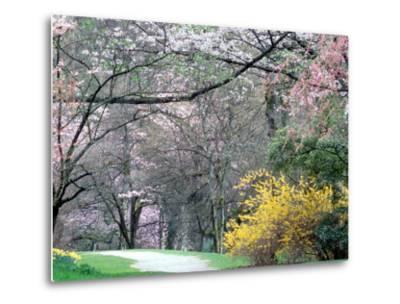 Spring Blooms in Washington Park Arboretum, Seattle, Washington, USA