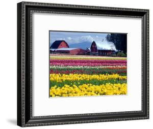 Tulip Display Field, Washington, USA by William Sutton