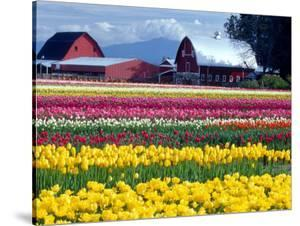 Tulip Display Field, Washington, USA by William Sutton