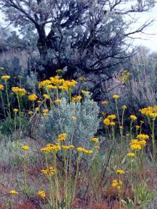 Wildflowers and Sage, Eastern Washington, USA by William Sutton