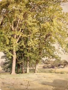 Maples in Chester County, Pennsylvania, 1889 by William Trost Richards