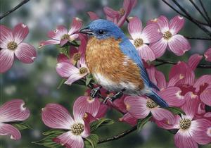 Bluebird/Pink Dogwood by William Vanderdasson