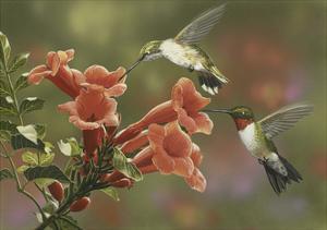 Hummingbirds and Trumpet Flowers by William Vanderdasson