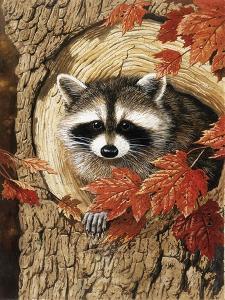 Raccoon by William Vanderdasson