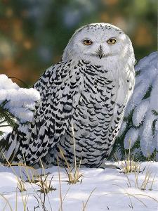 Snowy Owl by William Vanderdasson