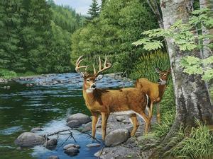 Streamside - White Tail Deer by William Vanderdasson