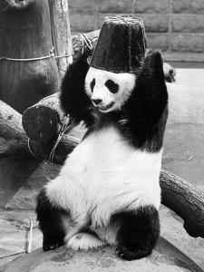 Panda Head Bucket by William Vanderson