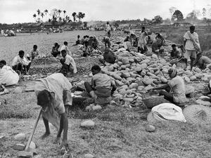 New Taxi-Strip Foundations are Laid by Natives of Assam Valley, Doubling China-India Air Traffic by William Vandivert