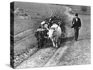 View of a Man Walking with a Cart Full of Wood by William Vandivert