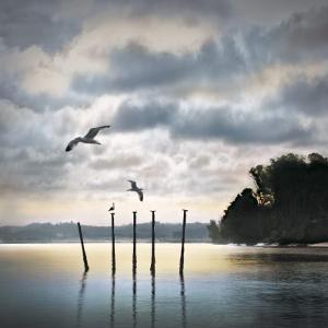 Circling Skies by William Vanscoy