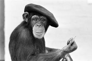 Artist Chimp 1955 by Williams