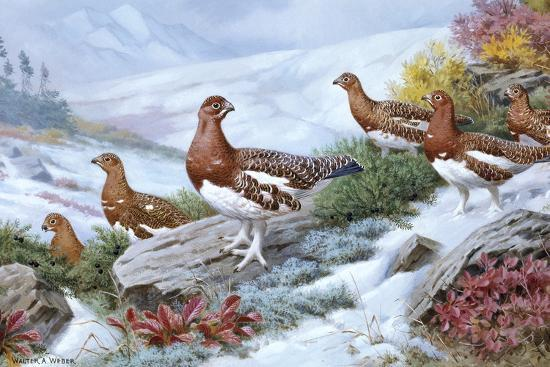 Willow Ptarmigans in Summer Plumage Leave Thicket to Search for Food-Walter A. Weber-Giclee Print