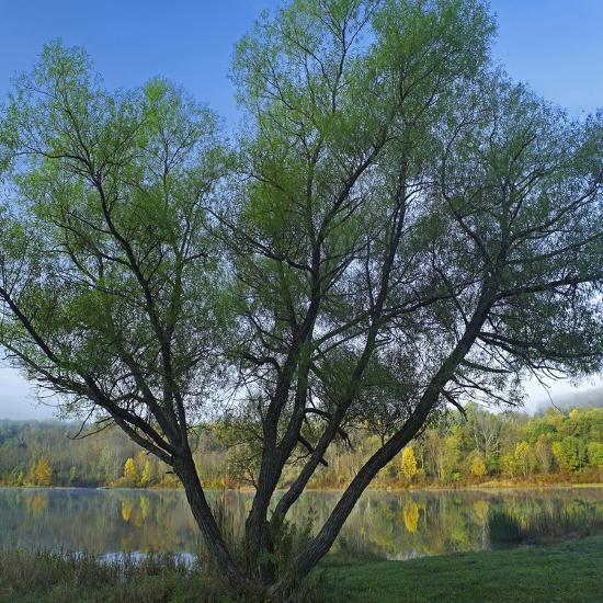 Willow Tree at Lackawanna Lake in Autumn, Lackawanna State Park, Pennsylvania, Usa-Tim Fitzharris-Photographic Print