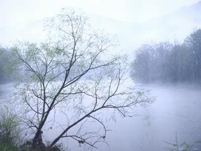 Willow Tree Rising Against Misty Cheat River Just Before Dawn-John Dominis-Photographic Print