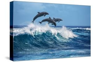Three Beautiful Dolphins Jumping over Breaking Waves. Hawaii Pacific Ocean Wildlife Scenery. Marine by Willyam Bradberry