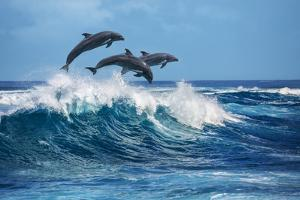 Three Beautiful Dolphins Jumping over Breaking Waves. Hawaii Pacific Ocean Wildlife Scenery. Marine by Willyam Bradberry
