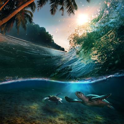 Tropical Paradise Template with Sunlight. Ocean Surfing Wave Breaking and Two Big Green Turtles Div