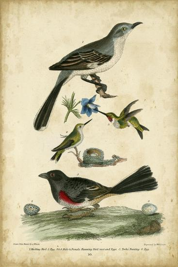 Wilson's Mockingbird-Alexander Wilson-Art Print