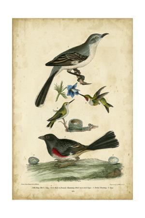 https://imgc.artprintimages.com/img/print/wilson-s-mockingbird_u-l-pnbus90.jpg?p=0