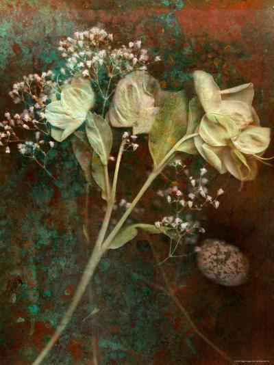 Wilted White Rose and Baby's Breath-Robert Cattan-Photographic Print