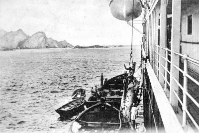 Winching a Cow onto a Boat Off the Coast of Chile, C1900s--Giclee Print