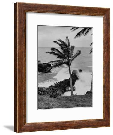 Wind Blowing the Palm Trees and the Waves Pounding on the Jamaica Coastline--Framed Premium Photographic Print