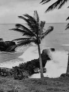 Wind Blowing the Palm Trees and the Waves Pounding on the Jamaica Coastline