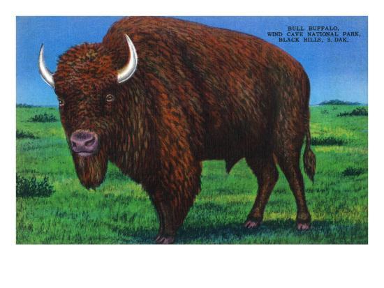 Wind Cave Nat'l Park, South Dakota - Bull Buffalo in Black Hills-Lantern Press-Art Print