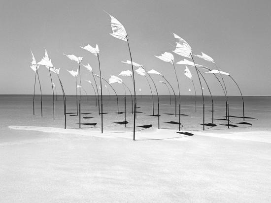 Wind-Installation I, 2015 Photographic Print by Jaschi Klein | Art com