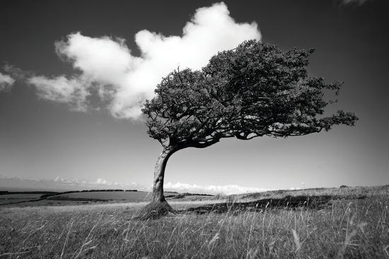 Wind-Swept Solitary Tree on Open Grassy Moorland-Design Pics Inc-Photographic Print