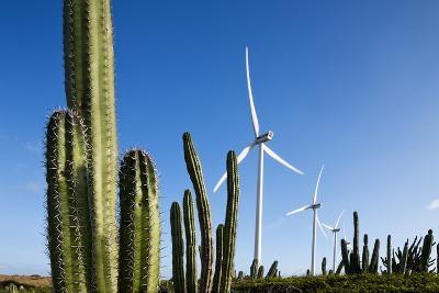 Wind Turbines and Cactus at Aruba--Photographic Print