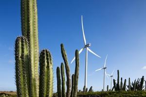 Wind Turbines and Cactus at Aruba