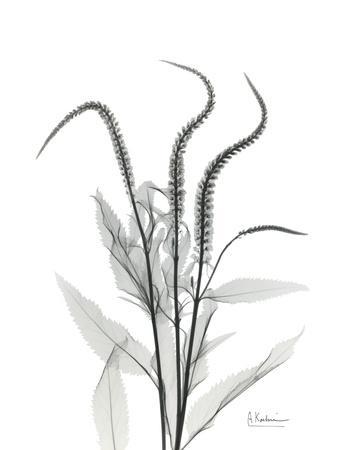 https://imgc.artprintimages.com/img/print/wind-zip_u-l-pyjpv30.jpg?p=0
