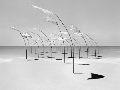 Windblumen 2-Jaschi Klein-Photographic Print