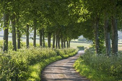 Winding Tree Lined Country Lane, Dorset, England. Summer (July)-Adam Burton-Photographic Print