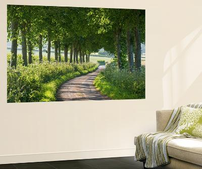 Winding Tree Lined Country Lane, Dorset, England. Summer (July)-Adam Burton-Wall Mural