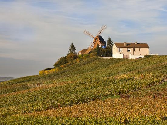 Windmill and Vineyards, Verzenay, Champagne Ardenne, Marne, France-Walter Bibikow-Photographic Print
