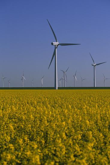 Windmill Park in Blooming Rape Field-Norbert Rosing-Photographic Print