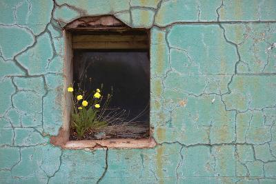 Window 3-Wayne Bradbury-Photographic Print